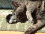 Rory Cat Loves TeddyBear