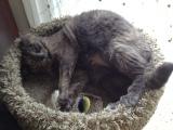 Rory Cat HatesSneezes