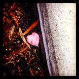 Gutter Heart