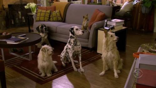 Robin_dogs